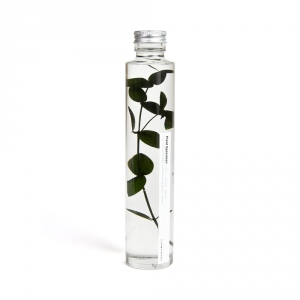 Bottle plant - Eucalyptus