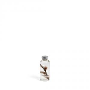 Plante immergée 200ml - Salix gracilistyla - Slow Pharmacy
