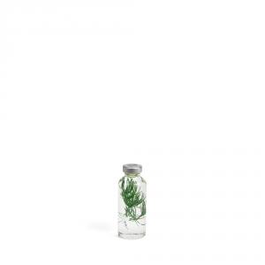 Plante immergée 200ml - Myriophyllum - Slow Pharmacy