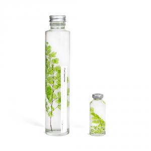 Bottle plant - Adiantum tenerum