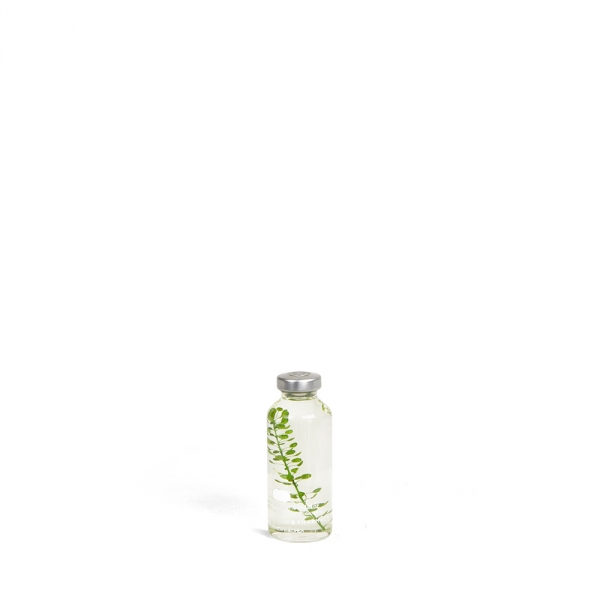 Bottle plant - Petit