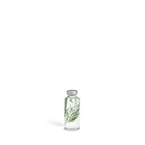 Bottle plant - Peacock grass