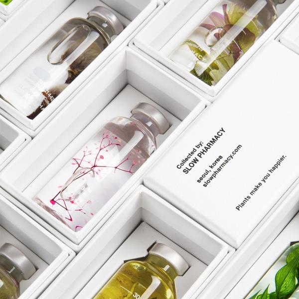 Bottle plant - Petit
