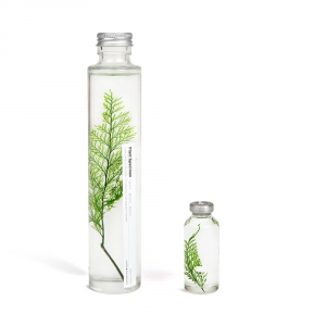 Plante immergée 200ml - Limonium tetragonum - Slow Pharmacy
