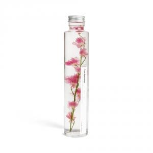 Plante immergée 200ml - Delphinium rose - Slow Pharmacy