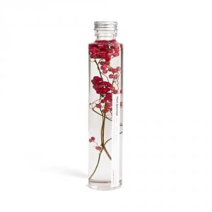 Bottle plant - Delphinium (pink)